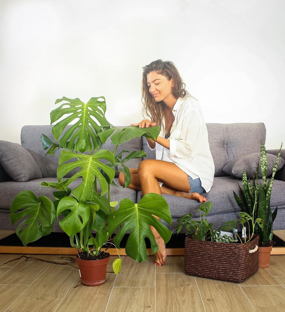 """Rezultat slika za upit """"biljke"""""""