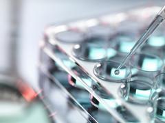 Microbiote intestinal et Covid-19 : des perspectives prometteuses