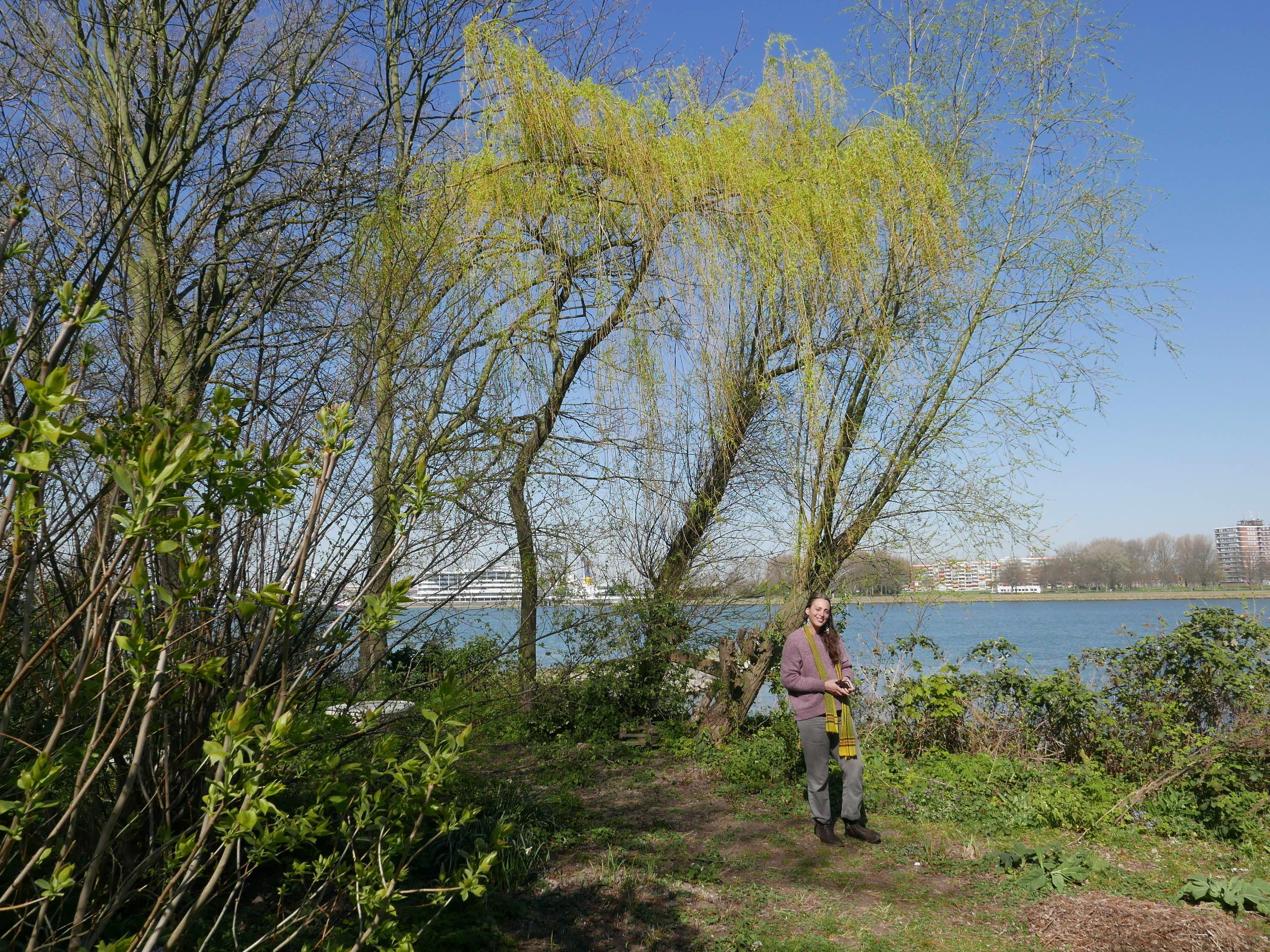 Tuin aan de Maas