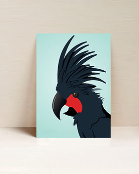 Palm Cockatoo.jpg