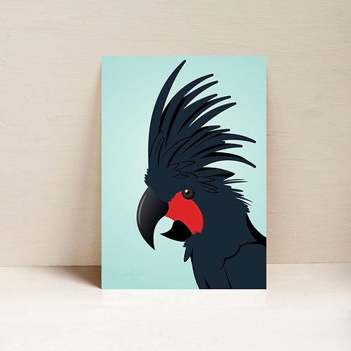 Blush the Palm Cockatoo