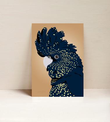 Betty the Black Cockatoo