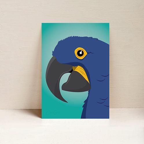 Blu the Hyacinth Macaw