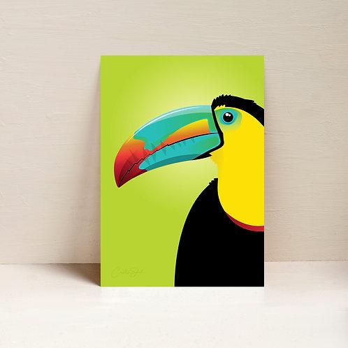 Tropic the Toucan