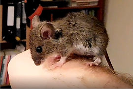 friendly mouse on hand