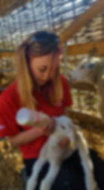 Girl bottle feeding lamb on smallholding course