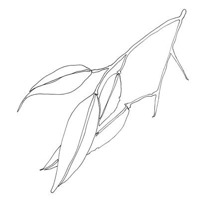 Gum Leaf Branch