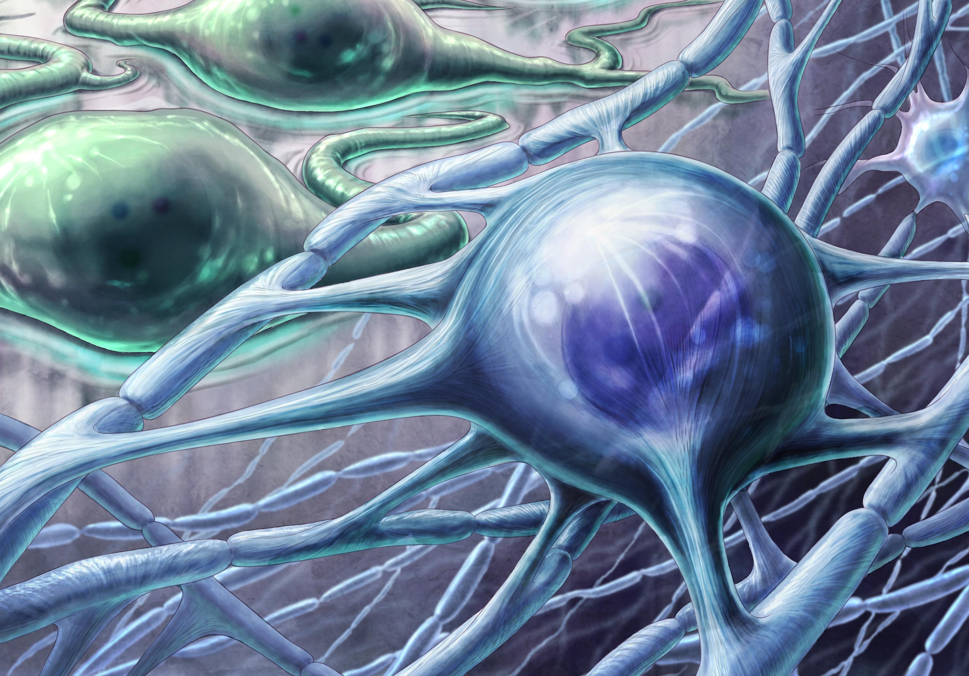 Oligodendrocyte