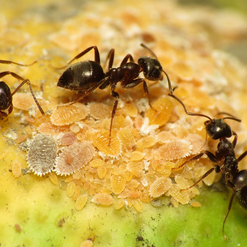 1. Ant.png
