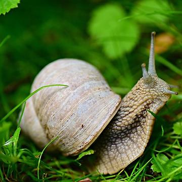 7. Snail.png