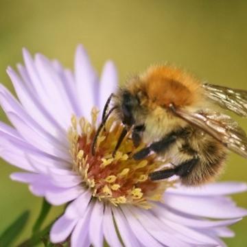 4. Bee.png