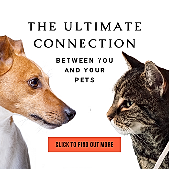 PETS - LOVE ENERGY - ULTIMATE CONNECTION