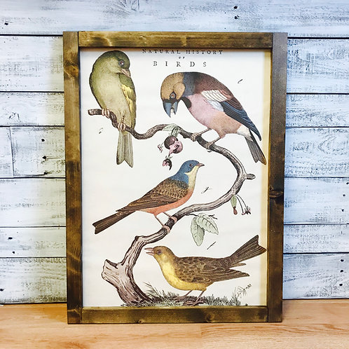 Natural History of Birds Framed Vintage Print
