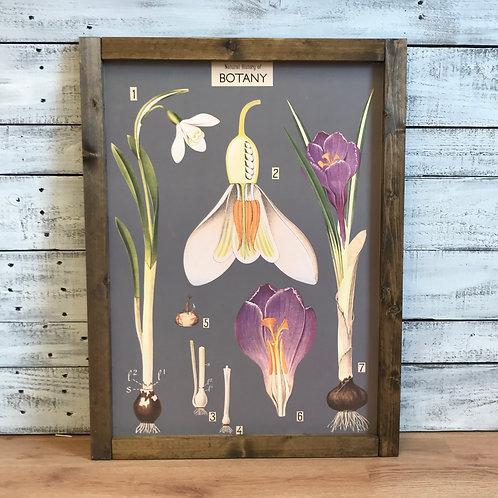 Natural History of Botany Framed Vintage Print