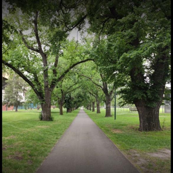 Princes Park or Royal Park - Nov 2021