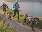 dog running on lead.jpg