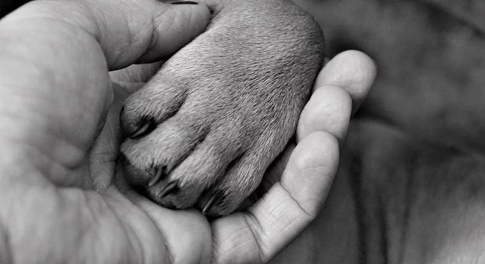 seguro para pet shop