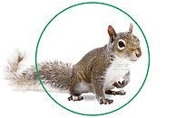 Squirrel Removal Brampton-2.jpg