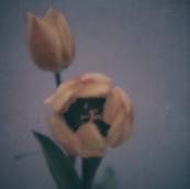 Flower Studies # 6