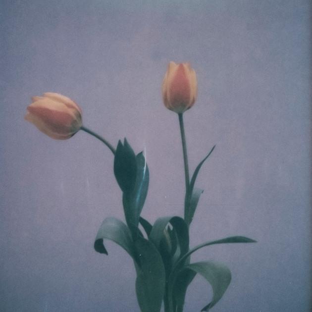 Flower Studies # 5