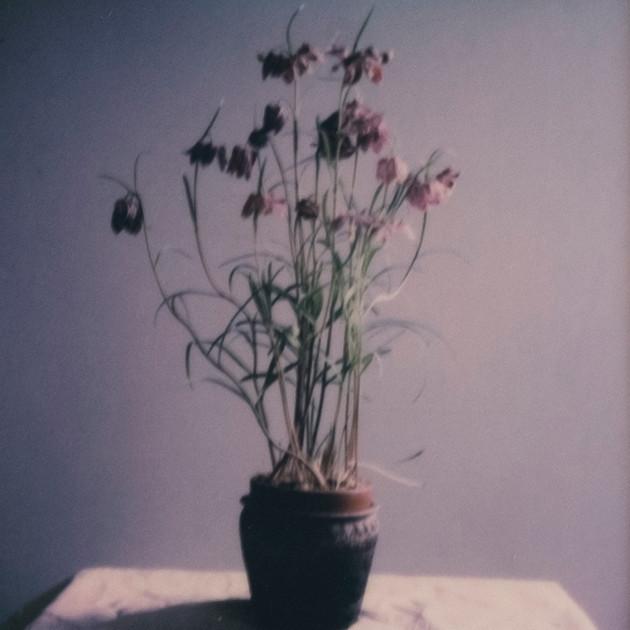 Flower Studies # 1