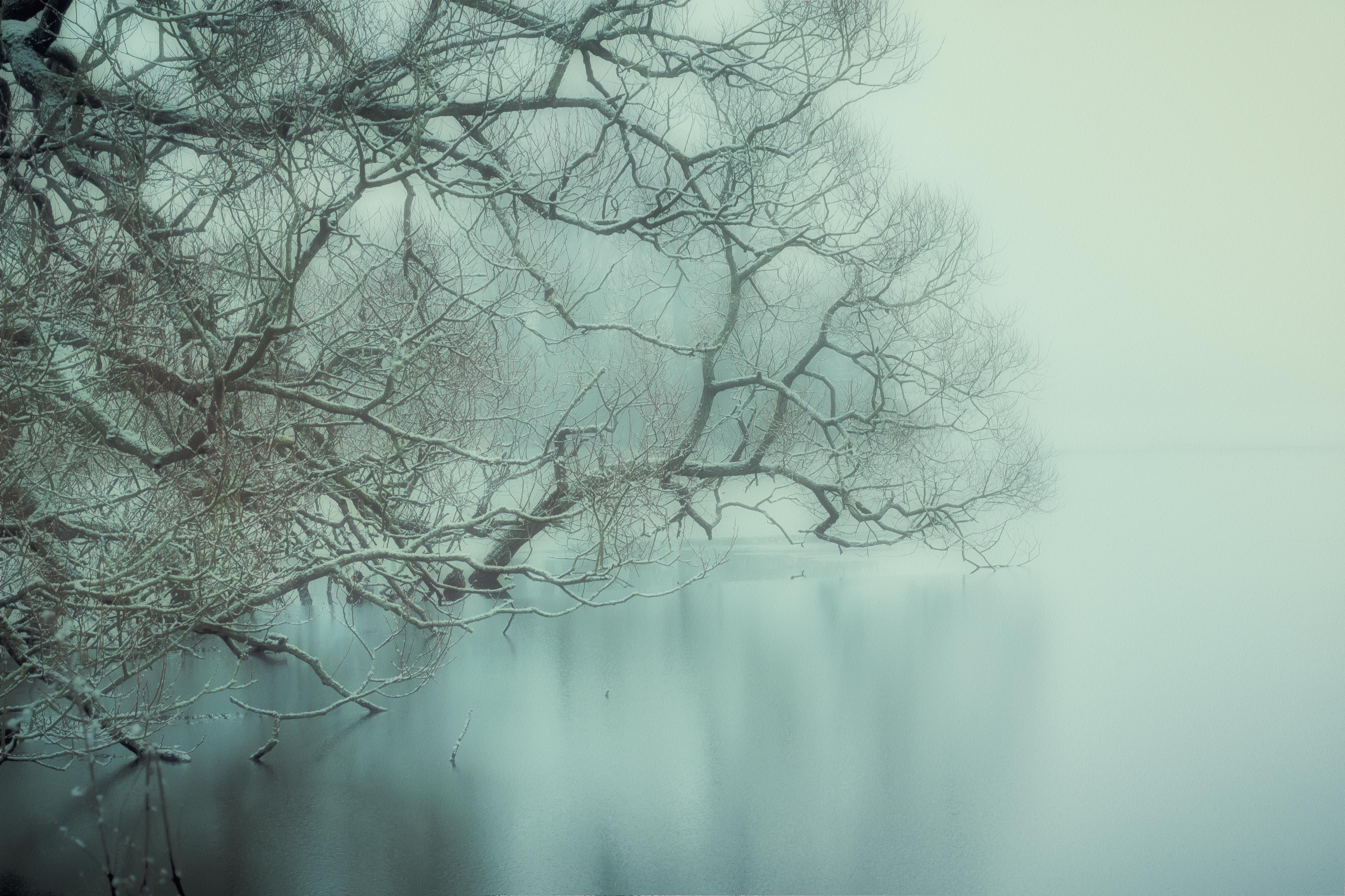 Frosty Fog I