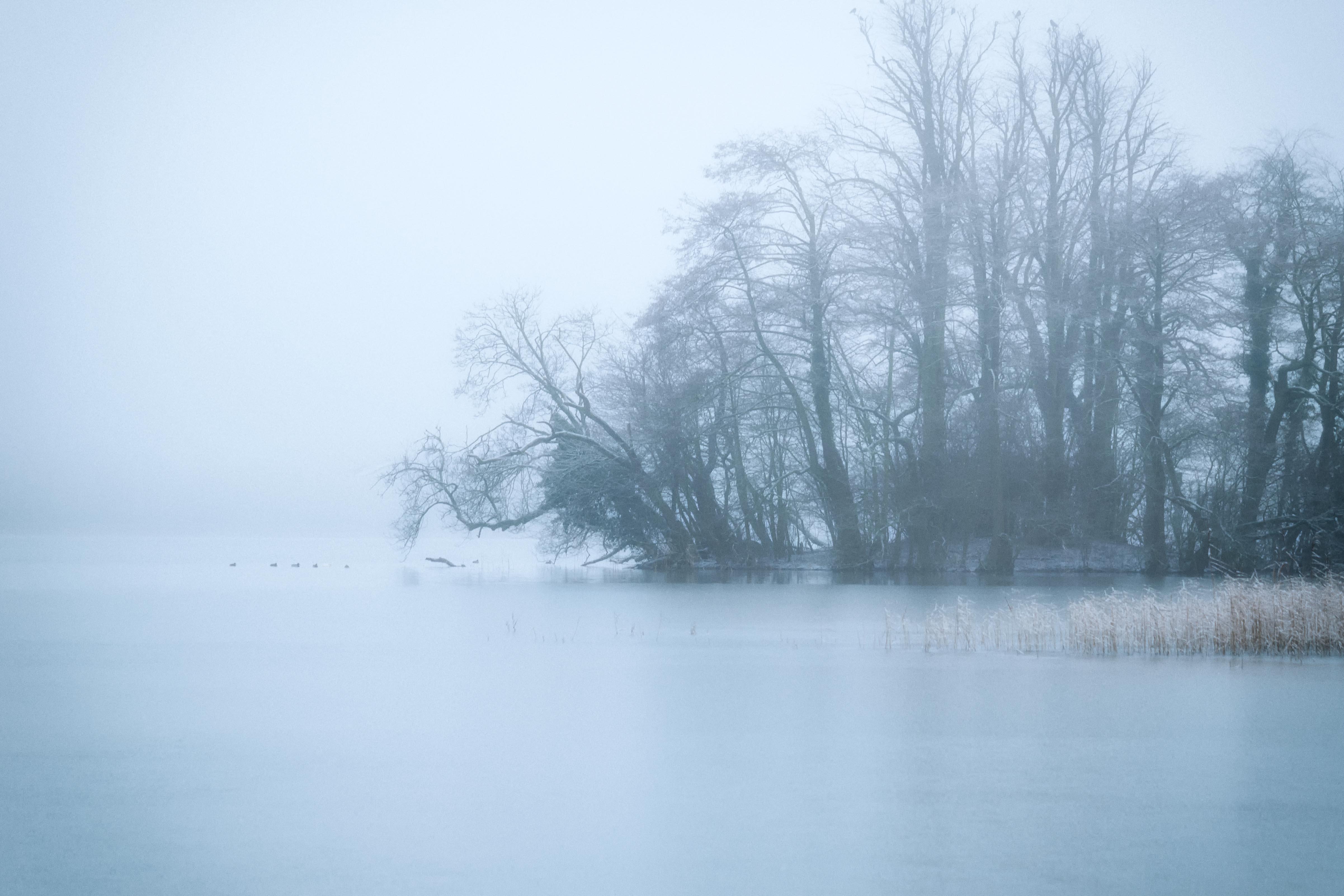 Frosty Fog II