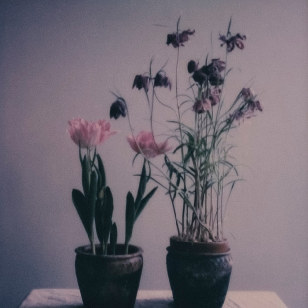 Flower Studies # 3