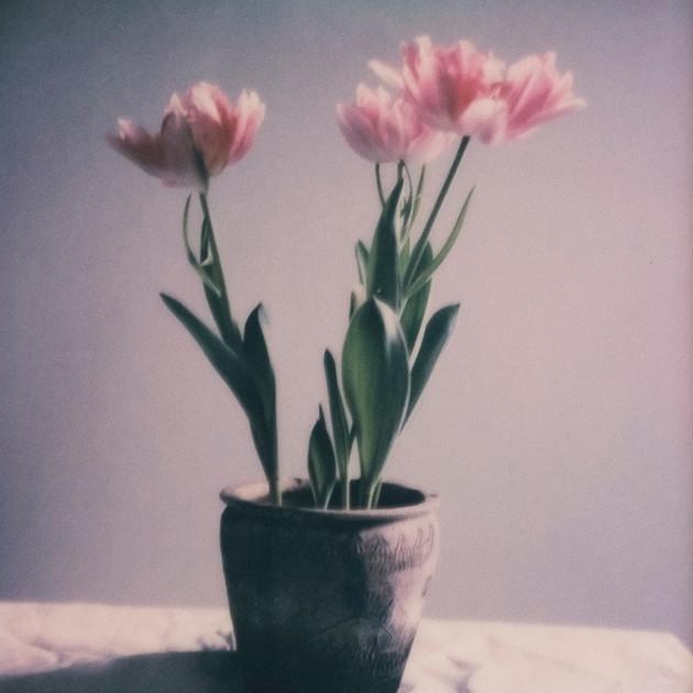 Flower Studies # 2