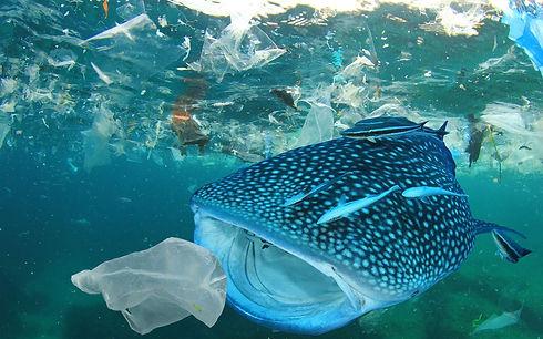 88528b02fb_50147695_pollution-plastique-