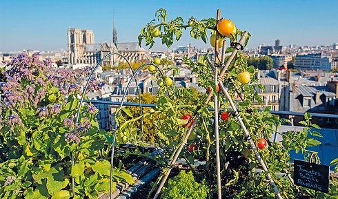 agriculture_urbaine_new_site_0.jpg