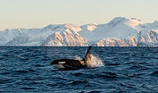 Whale Safari - Stella Oceana - World Sea Explorers