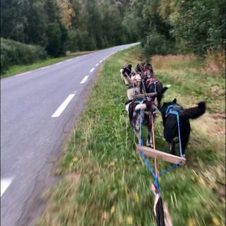 dog driving summer lofoten