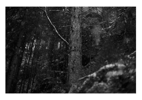 Caroline Wimmer Photography 8