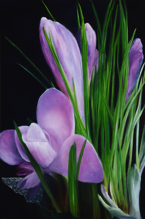 Purple Crocuses