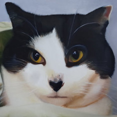 The Younger Cat