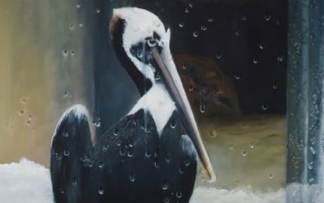 Pelican: Who's Looking at Who?