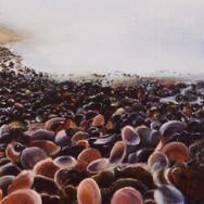 Beach of Shells - Ashqelon, Israel