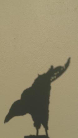 corbeau ombre