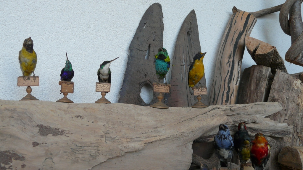 la langue des oiseaux détail