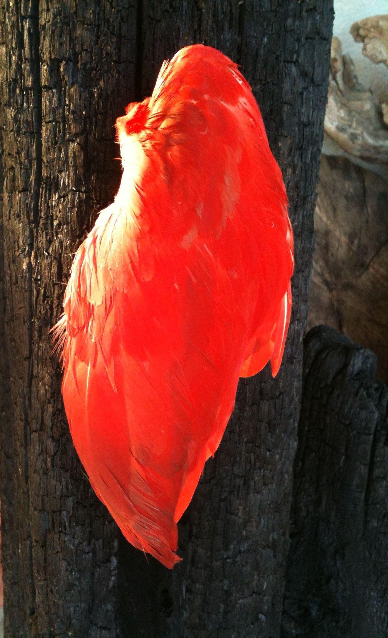 Elle de phoenix