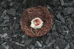 Elle de phœnix nid