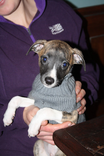 Litte pup in his jumper