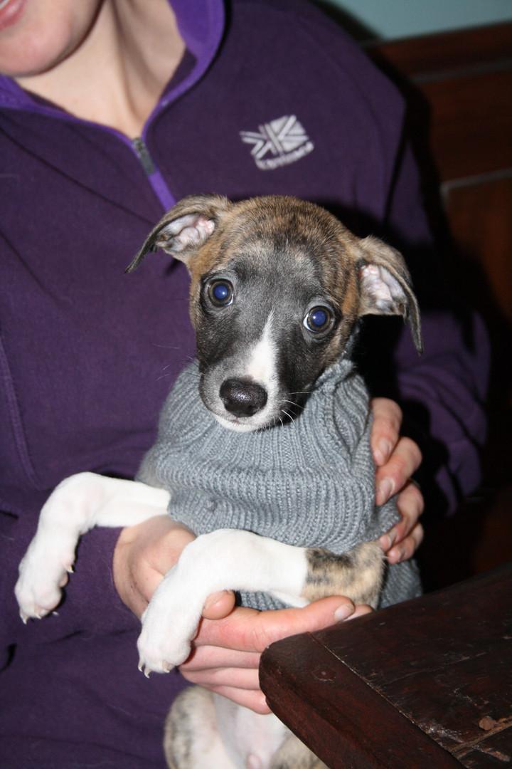 Litte pup in his jumper