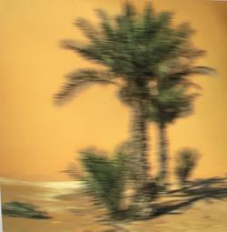 PALM, LIWA DUNE TRAVELING TWICE THE