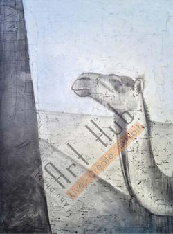 TAITAL CAMEL