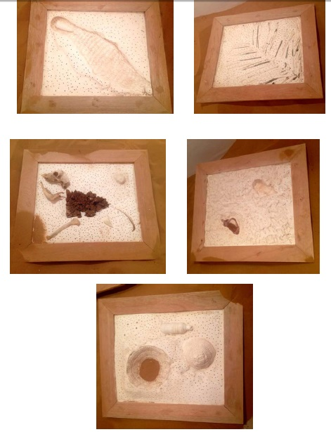 FOSSILS FROM ARABIA 1-5