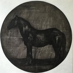 BLACK HORSE OLD TORI