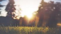 5 tipos de grama que você precisa conhecer