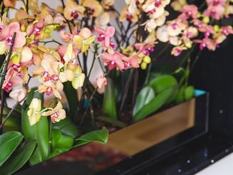 Plantas para o inverno que você pode ter em casa